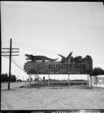 Gertrude Perkins.alligator farm -Perkins.36.jpg
